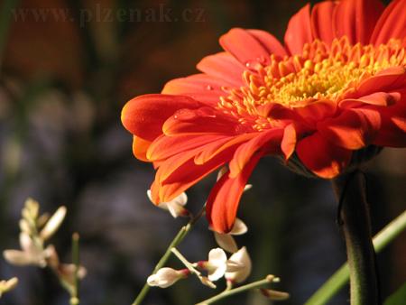 foto květina